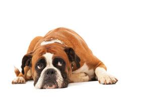 <em>Cama fría para perros 30x40cm</em>: <mark>Acquista</mark> a prezzo di super offerta dallo Smartphone