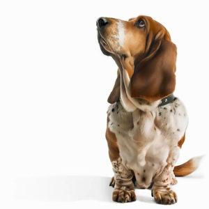 <u>Acquista</u> in linea <strong>Guinzaglio per Cani Mani Libere</strong> a un prezzo insuperabile da dove vuoi