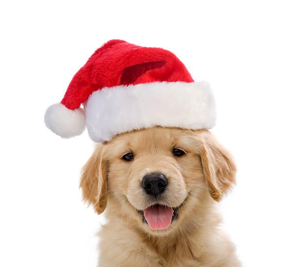 <ins>Doppia Ciotola per Cani Regolabile Pet Prior</ins> in vendita on-line ai migliori prezzi