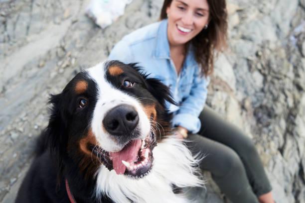 <ins>Giocattoli per Cani Neon</ins> per <ins>Acquista</ins>re su Internet con i prezzi piú ribassati