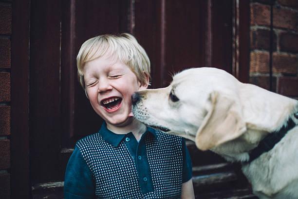 <ins>Acquista</ins> <em>Pettorina Rifrangente per Cani Pet Prior</em> da dove vuoi a prezzi da matti su Internet