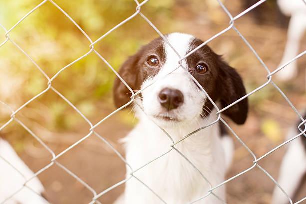 <em>Acquista</em> <em>Ciotola cibo e acqua per Animali Domestici Pet Prior</em> ai migliori prezzi