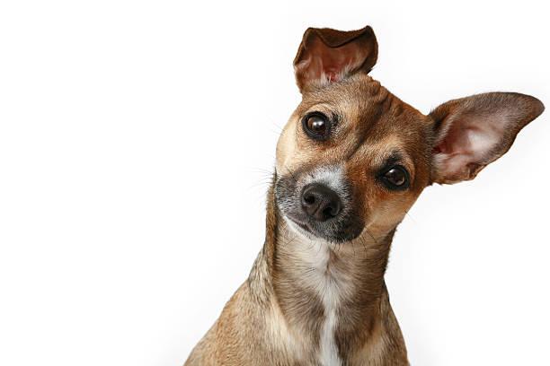 <ins>Corda con Pallina per Cani Pet Prior</ins> in vendita online a prezzi da matti