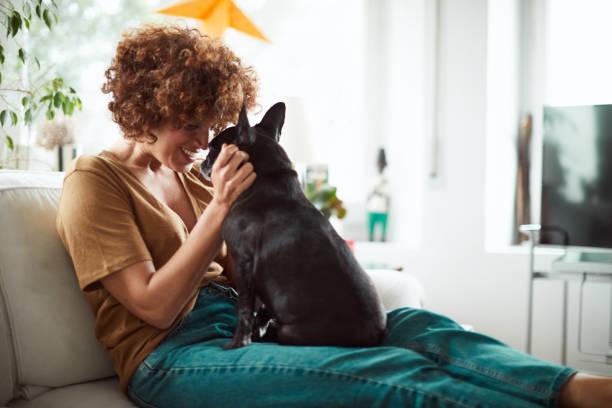 <em>Giocattolo per Gatti Pet Prior</em>: <ins>Acquista</ins> a un prezzo insuperabile dal dispositivo