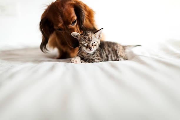 <em>Acquista</em> <strong>Ciotola Pieghevole per Animali Domestici 145935</strong> online dal cellulare