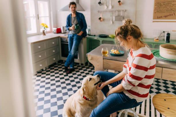 <strong>Acquista</strong> <mark>Piscina per Animali Domestici InnovaGoods</mark>  a prezzo di super offerta