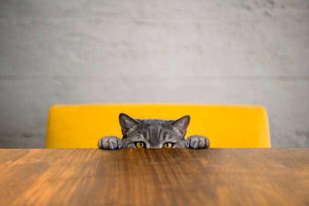 <u>Acquista</u> <mark>Collare con Bandana per Animali Domestici 143062</mark> da dove vuoi ai migliori prezzi su Internet