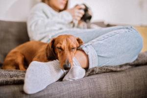 <u>Corda con Doppio Nodo per Cani</u> per <ins>Acquista</ins>re on-line con la migliore offerta
