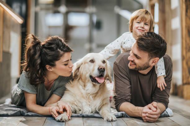 <mark>Materassino Rinfrescante per Animali Domestici Pet Prior (65 x 50 cm)</mark>: <strong>Acquista</strong> online al miglior prezzo da casa