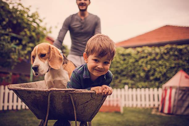 <u>Acquista</u> online <strong>Asciugamano Super Assorbente per Animali Domestici InnovaGoods</strong> a prezzo di super offerta da casa