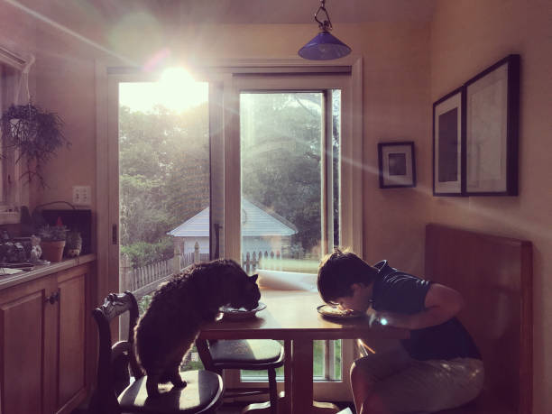 <u>Acquista</u> <em>Set di Spazzole per Cani Collection Pet Prior (3 Pezzi)</em> da casa a un prezzo incredibile su Internet