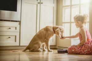 <mark>Acquista</mark> on-line <ins>Arco Massaggiatore per Gatti My Pet EZ</ins> con la migliore offerta  dal laptop