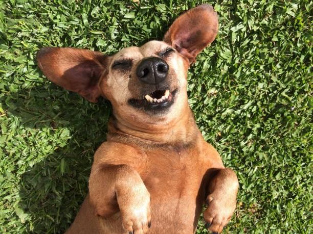<mark>Acquista</mark> <em>Coperta con le Maniche per Cani Symbols Snug Snug One Doggy</em> da dove vuoi a un prezzo insuperabile in linea