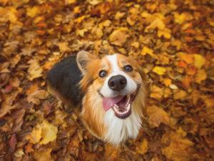 <u>Pettorina Regolabile per Cani Pet Prior</u>: <strong>Acquista</strong> a prezzi pazzeschi da casa