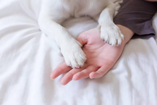 <mark>Ciotola per animali domestici (ø 26 cm)</mark>: <em>Acquista</em> al miglior prezzo da casa