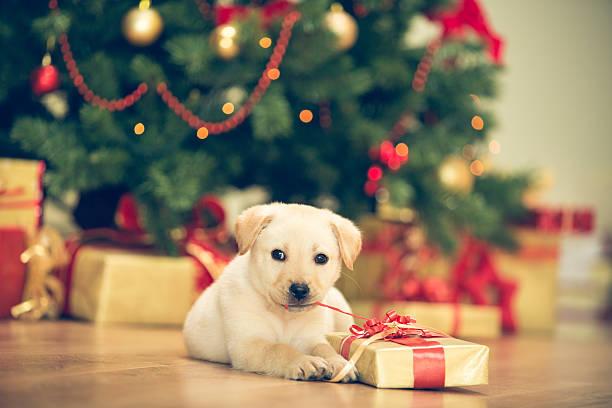<mark>Acquista</mark> online <ins>Gilet Rinfrescante per Animali Domestici Medi InnovaGoods - M</ins> a un prezzo insuperabile  dal cellulare